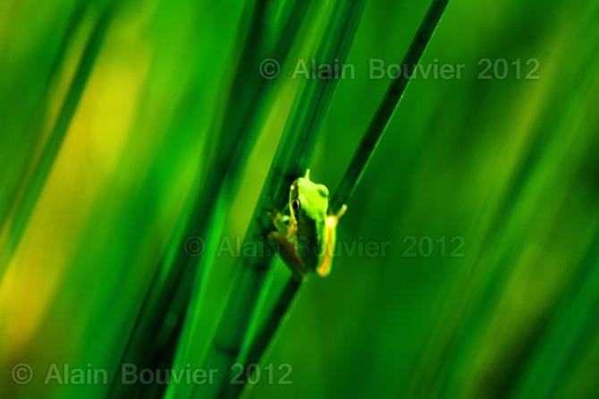 frog 12x18web