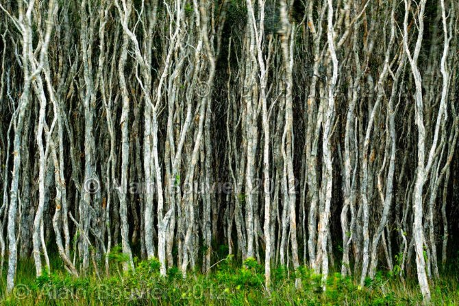 trees 12x18web